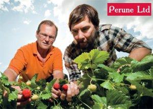 Работа в Финляндии по сбору урожая клубники. Вакансии