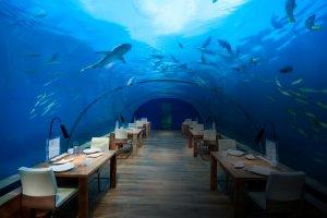 Вакансии для работы в отелях Conrad Dubai Hotel (ОАЭ)